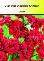 Dianthus diadoble \' Double Crimson\'