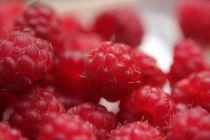 Framboisier \'Autumn First\'®  - Rubus idaeus