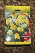 Narcisse \'Jonquilles\'