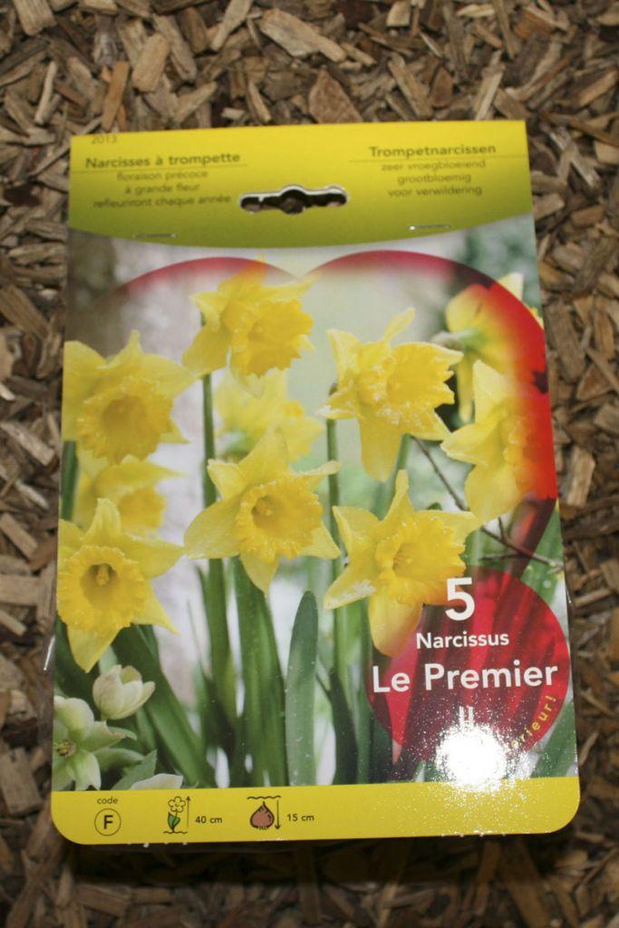 Narcisse \'Le Premier\'