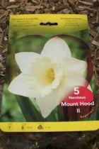 Narcisse \'Mount hoot\'