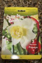 Narcisse \'Popeye\'