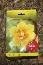 Narcisse \'Tahiti\'