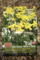 Narcisse \'Tête à tête\'