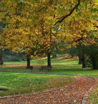 Couleurs d'automne des arbres caducs. Ils prennent des teintes jaunes, orangées, rouges avant de perdre leurs feuilles.