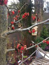 Parrotia*  persica \'Vanessa\'