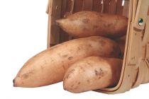 Patate douce - ipomee batatas \'Bonita\'