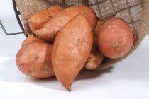 Patate douce - ipomee batatas Beauregard