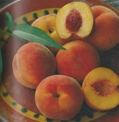 Pêcher \'Orlandine\' ® Ferradin, arbre fruitier caduc à feuille verte et aux fruits rouge sur fond orangé en été.
