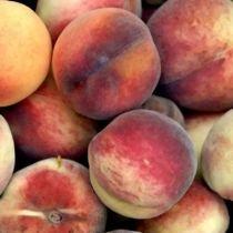 Pêcher de \'Vigne Jaune\', arbre fruitier caduc à feuille verte et aux fruits jaune et rouge en été.