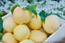 Pêcher nain Fruit Me® Ice Peach® - Prunus persica