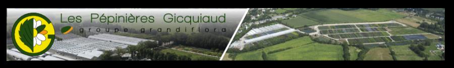 Les pépinières Gicquiaud, vente et production de plantes en Loire Atlantique