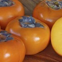 Plaqueminier - Kaki \'Fuyu\', arbre fruitier caduc à feuilles vertes et aux fruits rouge orangé en hiver.