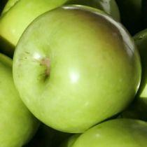 Pommier \'Granny Smith\', arbre fruitier à feuille caduc verte et aux fruits vert clair en hiver.