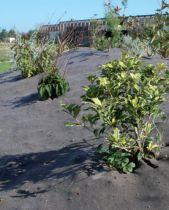 Toile marron Creasis Plus 106cm