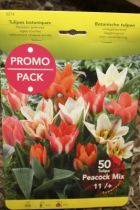 Tulipe \'Botanique en mélange\'