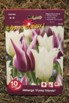 Tulipe \'Funky friends\'
