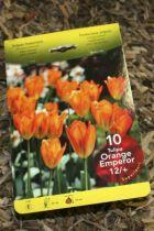 Tulipe \'Orange emperor\'