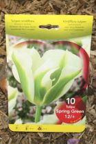 Tulipe \'Spring green\'