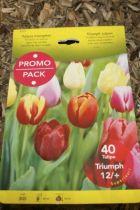 Tulipe \'Triomphe\' en mélange