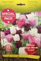 Tulipe en mélange magic