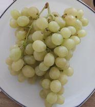 Vigne* \'Italia\'
